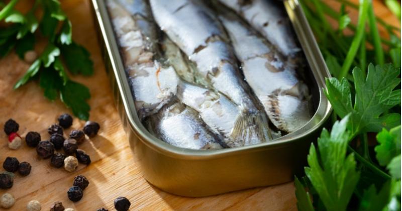 Soyez les bienvenus dans une usine de fabrication de sardines en boîte