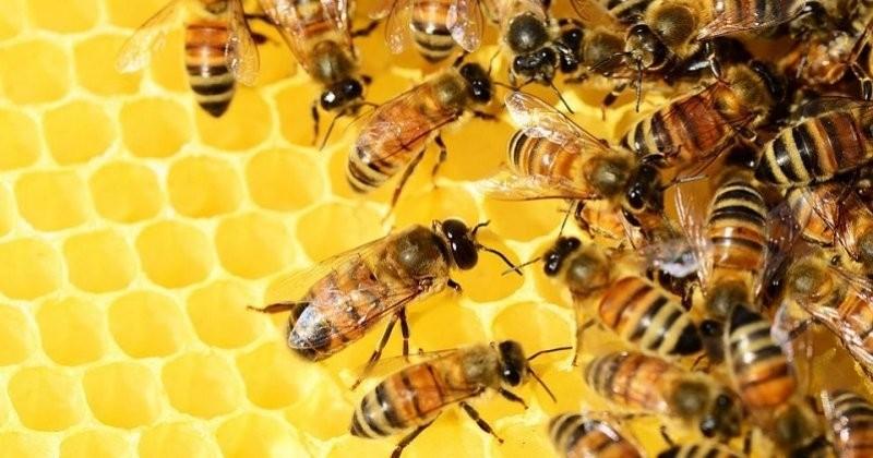 Les 200 000 abeilles des ruches de Notre-Dame ont survécu à l'incendie