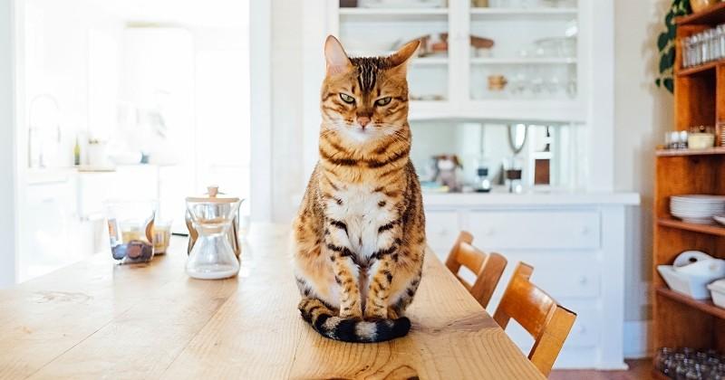 15 choses à savoir sur les chats