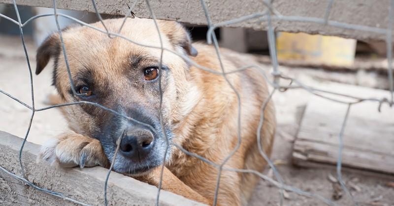 Un chien ligoté, sans eau ni nourriture, a été sauvé grâce à la mobilisation des habitants