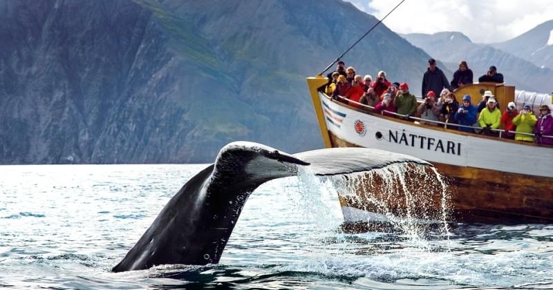 10 bonnes raisons de visiter le Groenland, un territoire magique