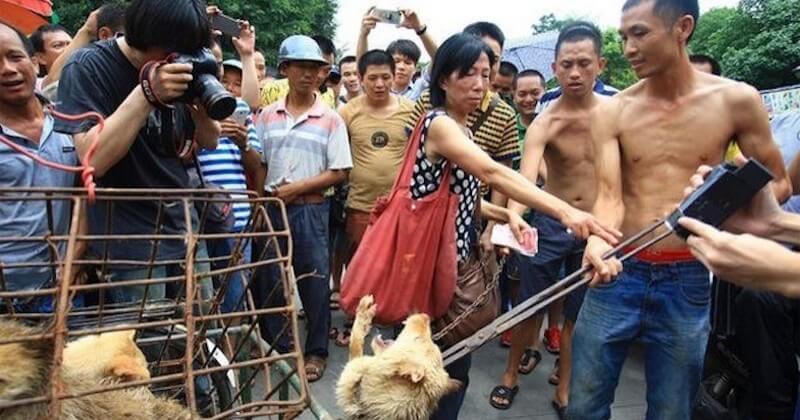 Chine : le festival de la viande de chien vient d'ouvrir ses portes malgré les interdictions