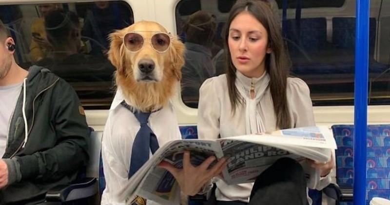 Une photographe britannique se met en scène avec son chien dans des situations amusantes et décalées