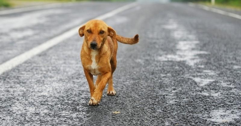 Suzy, le chien errant et mal nourri fait irruption en pleine nuit dans une maison et se fait adopter