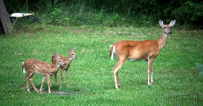 L'ONF appelle à la prudence dans les forêts pour ne pas effrayer les animaux sauvages et leurs petits