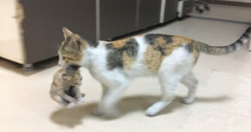 Une chatte est entrée dans un hôpital turc et a déposé son chaton malade aux pieds des médecins pour qu'ils le soignent