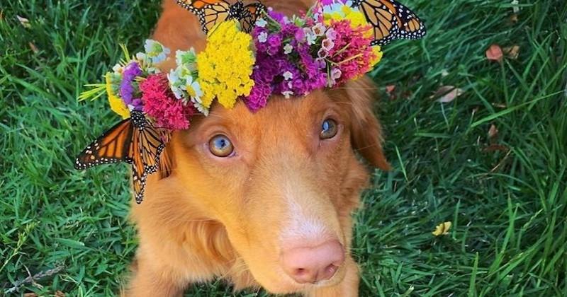 Ce chien a développé une amitié surprenante avec des...papillons !