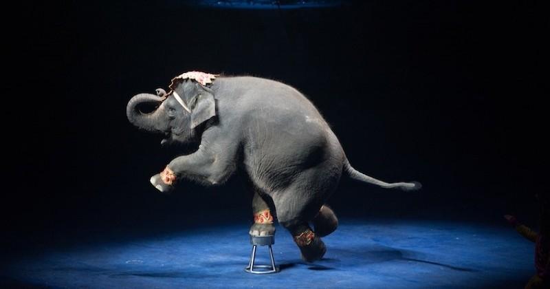 La ville de Lille favorable au retrait progressif des animaux sauvages dans les cirques