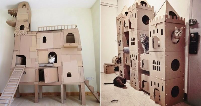 17 maîtres qui ont créé des abris spectaculaires pour faire plaisir à leur chat