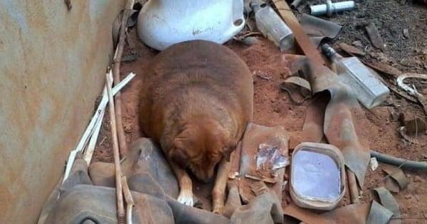 Ce chien abandonné et obèse était l'attraction d'une station-service mais personne n'avait pris l'initiative de s'occuper de lui… jusqu'à ce qu'il trouve son sauveur !