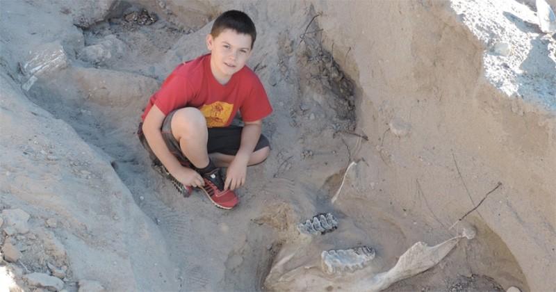Un enfant découvre un fossile vieux de 1,2 million d'années alors qu'il se promenait avec sa famille