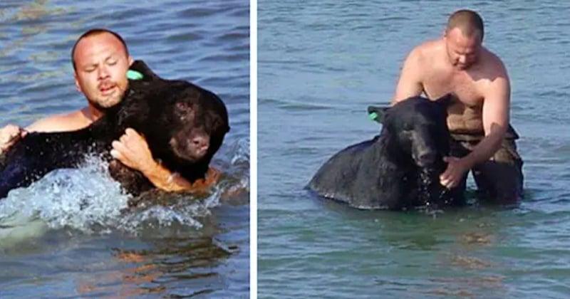 Armé de courage, un homme sauve un ours de la noyade