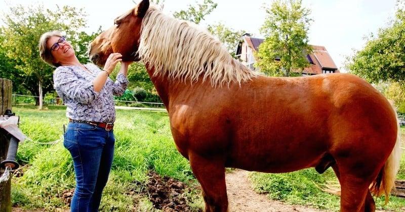 La justice oblige le cheval Sésame à changer de parcelle à cause de l'odeur de son crottin