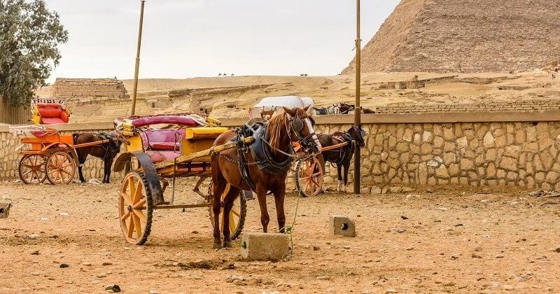 Égypte: les promenades à dos de chameaux, de chevaux et d'ânes désormais interdites autour des pyramides de Gizeh