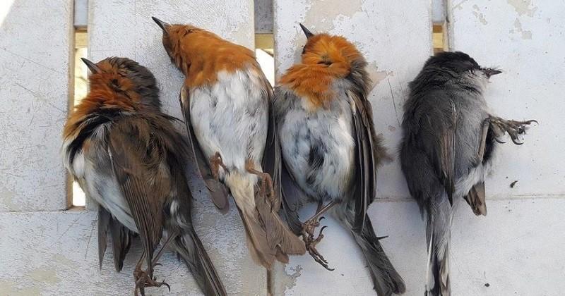 Var : Saisie record de 1903 pièges à oiseau découvert au domicile d'un braconnier
