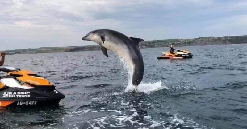 Ces jet-skieurs ont été surpris par le spectacle d'un dauphin sautant à côté d'eux dans la mer