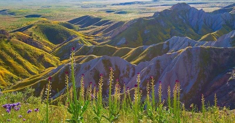 Après des années de sécheresse, la Californie retrouve ses champs de fleurs multicolores