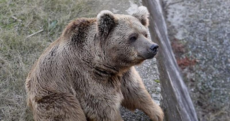 Après 13 ans de captivité et de maltraitance, les derniers occupants d'un zoo vont rejoindre un sanctuaire
