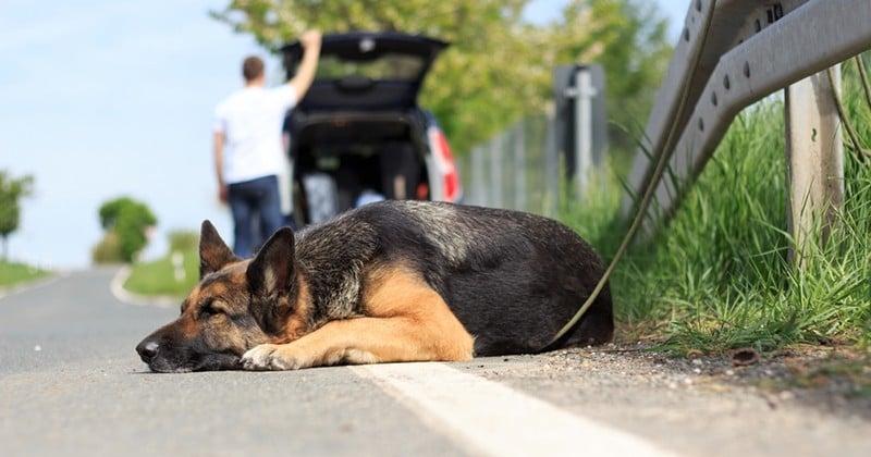 Depuis le début de l'été, plus de 8 000 animaux ont été abandonnés par leurs propriétaires en France
