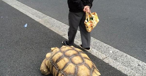 Avoir une tortue comme animal de compagnie c 39 est le for Avoir une tortue a la maison