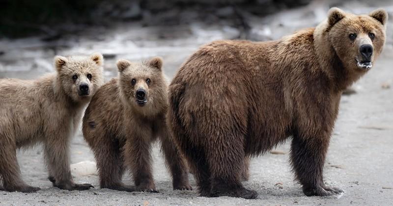 Passionnée d'animaux, elle parcourt le continent nord-américain et en rapporte des photos magnifiques