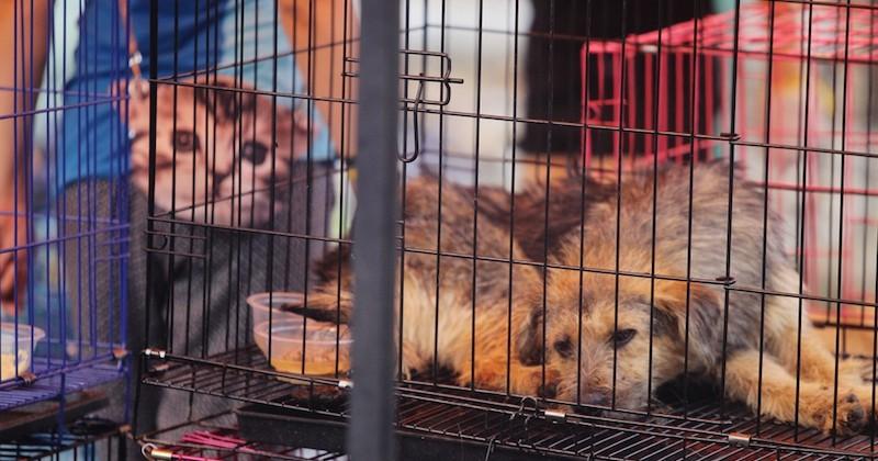 Val-de-Marne : une association sauve des chiens et des chats destinés à être mangés