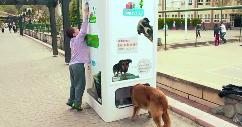 Istanbul : cette machine donne de la nourriture aux chiens errants en échange de bouteilles en plastique