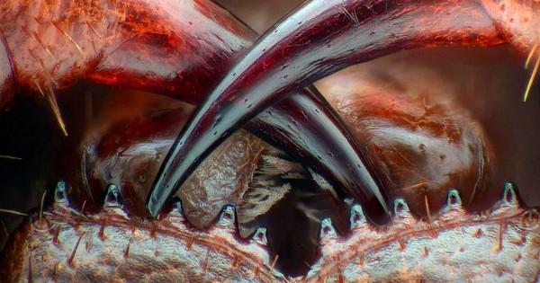 Avec les 20 plus beaux clichés du concours annuel de photomicrographie, découvrez le monde comme vous ne l'avez jamais vu