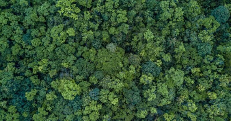 En 20 ans, les forêts du monde entier ont regagné une superficie équivalente à la France