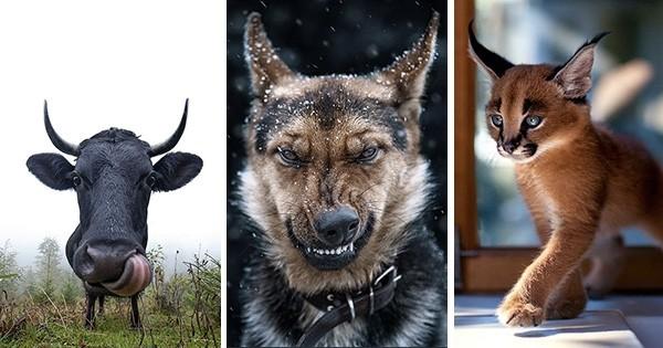 Les clichés de cet homme qui photographie de façon unique les animaux sont absolument magnifiques