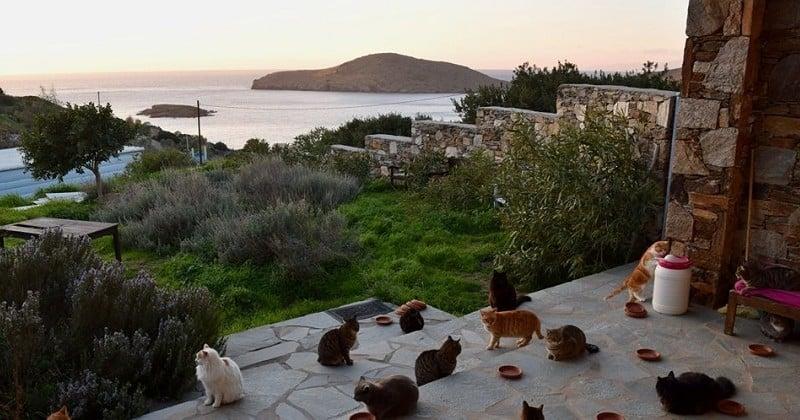 Tout quitter pour s'occuper de 55 chats sur une île paradisiaque ? C'est désormais possible