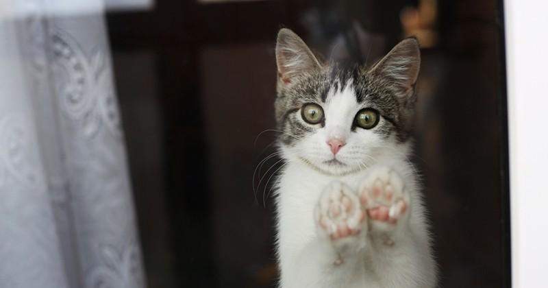 New York devient le premier État américain à interdire le dégriffage des chats