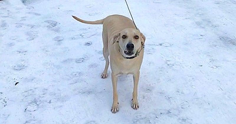 En guidant la police vers son maître aveugle tombé dans un ruisseau glacé, ce labrador lui a sauvé la vie