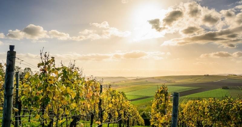 En Italie un immense vignoble de prosecco est en vente