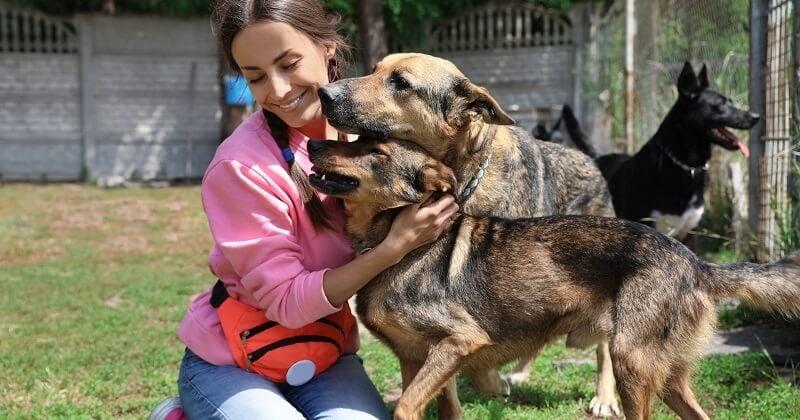 Protection des animaux: un test bientôt obligatoire pour avoir un chien ou un chat?