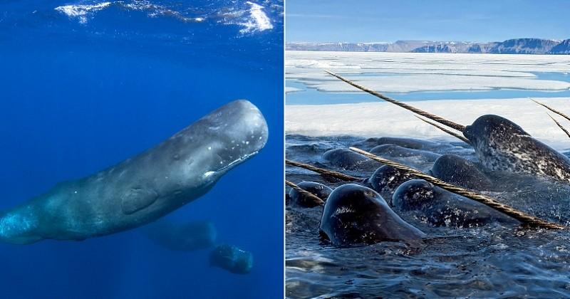 Les plus grands animaux marins vivant encore aujourd'hui