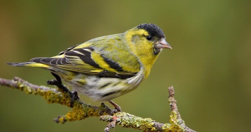 La France a trois mois pour interdire la chasse d'oiseaux protégés