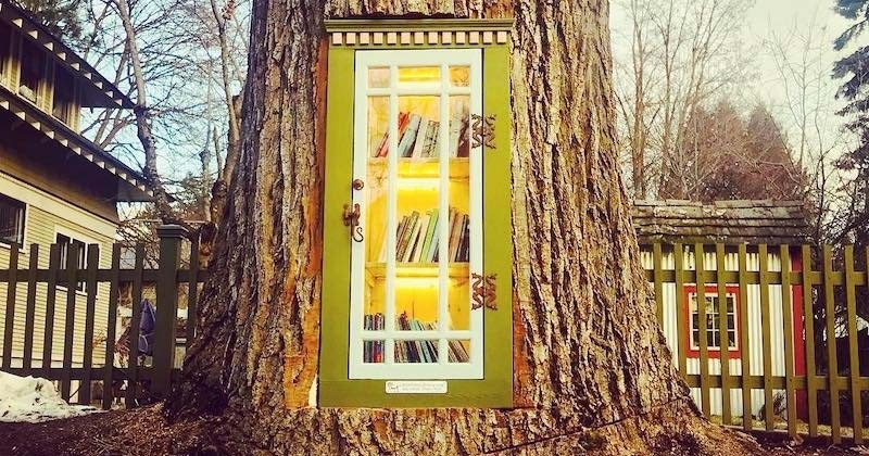 La souche de cet arbre centenaire décimé a été transformée en petite bibliothèque de rue