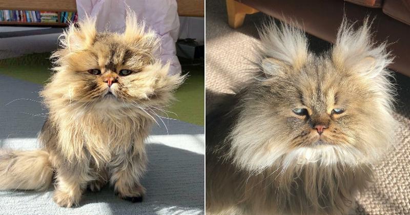 Voici Barnaby, le chat qui semble avoir en permanence la tête dans le pâté