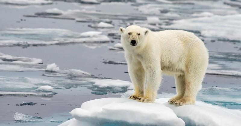 Les experts du Giec appellent à des transformations « sans précédent » pour lutter contre le réchauffement climatique