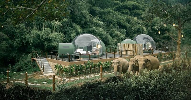 En Thaïlande, cet hôtel écoresponsable propose de dormir dans des bulles au milieu des éléphants