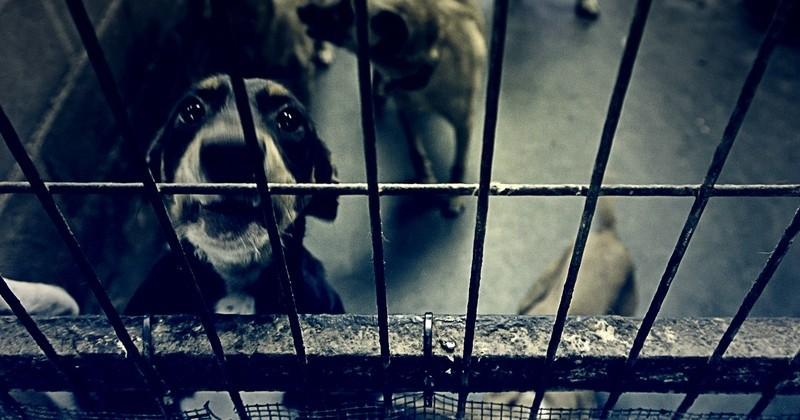 États Unis : la Californie vient d'interdire la vente d'animaux issus de l'élevage dans les animaleries, afin de renforcer les adoptions