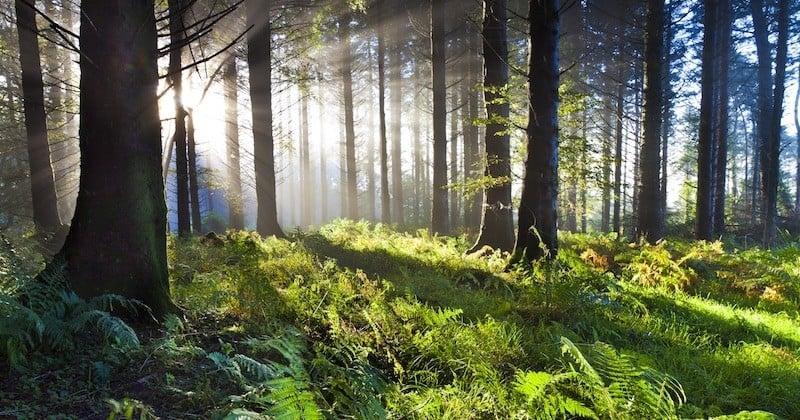 L'Irlande va planter 440 millions d'arbres dans les deux prochaines décennies pour lutter contre le réchauffement climatique