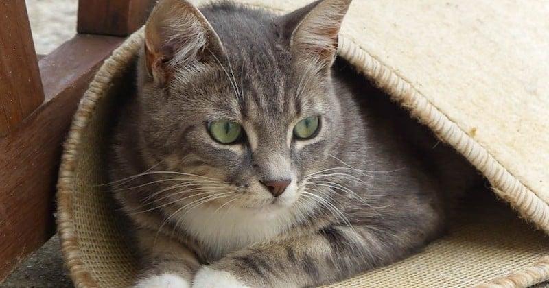 Disparu depuis plus d'un mois, leur chat est retrouvé le jour de Noël