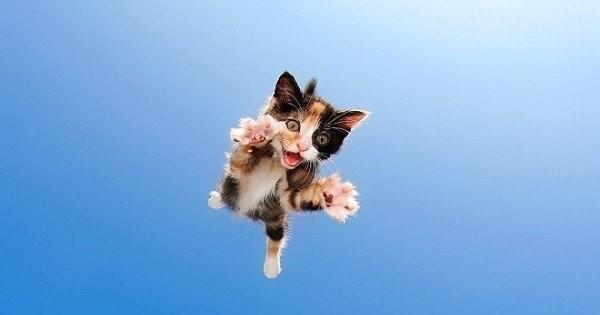 Ces photos de chatons en train de bondir vont vous faire craquer... Ils sont trop mignons !