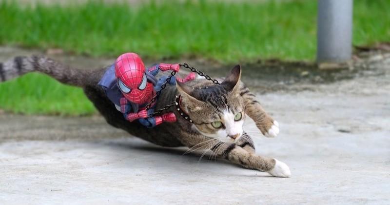 Un chat et un bébé Spider-Man sont réunis dans des aventures mises en scène par un photographe