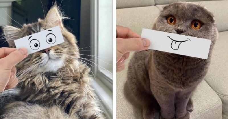 Avec des petits dessins, il donne à ses chats des vraies expressions de cartoons