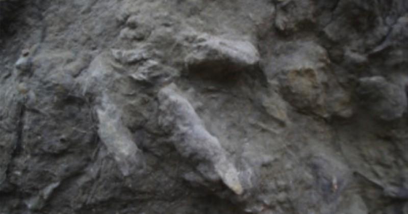 85 empreintes de dinosaures, en très bon état de conservation, ont été découvertes en Angleterre