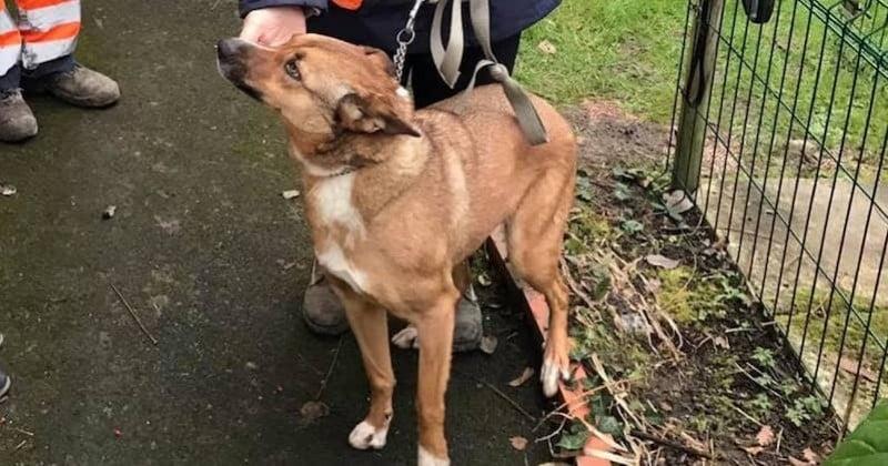 14 mois après la disparition de son chien, ce maître ne cache pas son émotion en le retrouvant dans un refuge