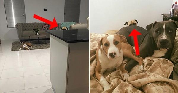 Ce maître s'est rendu compte qu'il était surveillé en permanence par son propre chien! Les photos sont flippantes...